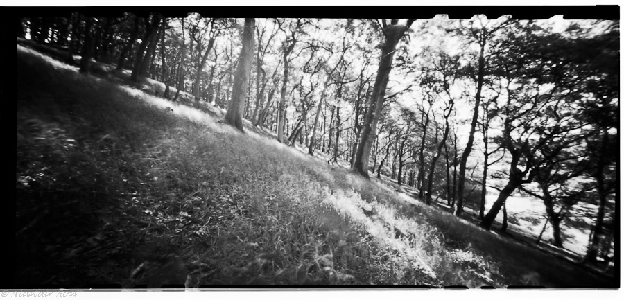 Pinhole - Sunlight Dappled Woodland - 1minute 40 seconds @ f/158 on Ilford FP4