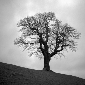 Chatsworth Tree