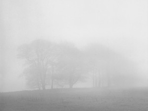 Black and White photograph of trees near Gibb Hill Barrow in the Derbyshire Peak District