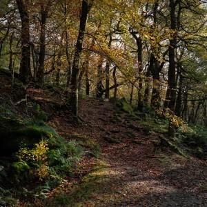 Padley Gorge Trees in Autumn, Peak District peak district