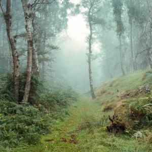 Bole Hill Trees in Autumn, Peak District