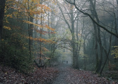 Bridleway and Brook, Autumn, Ecclesall Woods photography by Alastair Ross