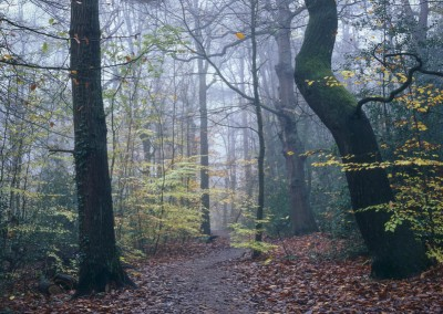 Ecclesall Woods, Autumn, photography by Alastair Ross