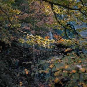 Sun light through the tree, Hodge Close, Lake District