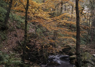 Padley Gorge in Autumn, Peak District photography by Alastair Ross