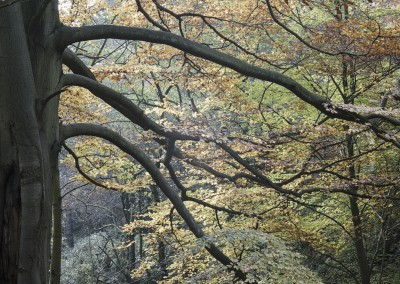 Padley Gorge in Autumn landscape photography by Alastair Ross