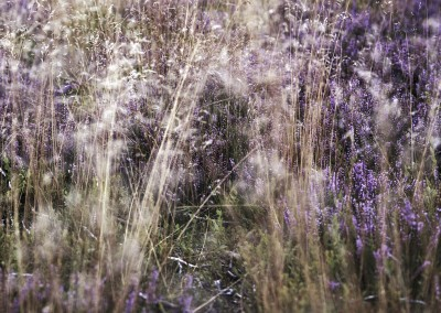Dried Grass and Heather, Stanton Moor, Peak District Photography