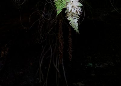 White Fern, Eskdale, Weatern Lakes, lake district landscape photographer