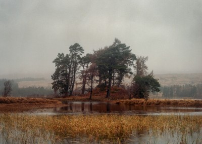 Scots Pine, Loch Tulla, Scotland scottish landscpe photography