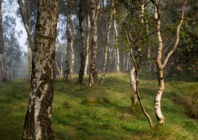 Birches and Mushroom, Bolehill Quarry, Peak District, peak district landscape photography
