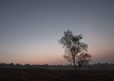 Pre-Dawn Birch, Surprise View, Peak District