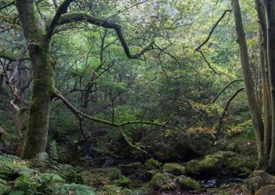 Autumn is Coming, Padley Gorge, Peak District, peak district landscape photography