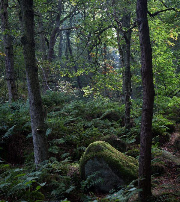 Green Padley Gorge, Peak District