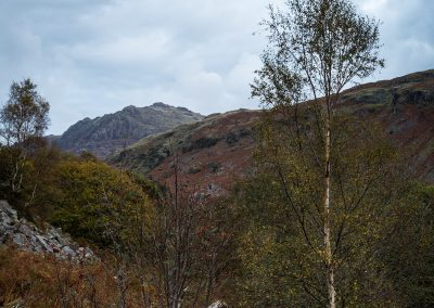 Kepple Crag, Birch and Mountain Ash, lake disrtict landscape photography