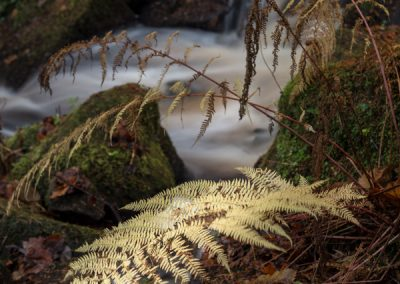 Bleaching Fern, Wyming Brook, Sheffield, landscape photography