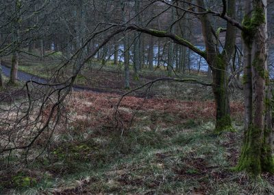 Tin Town, Derwent Reservoir III, peak district, peak district landscape photography, trees