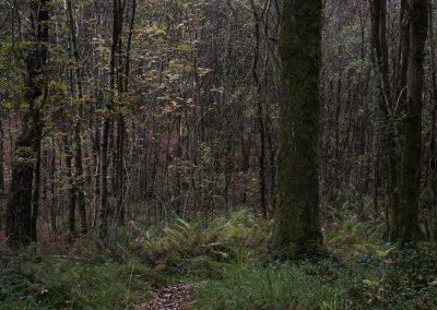 Path III, Eskdale, Lake District, lake district landscape photography