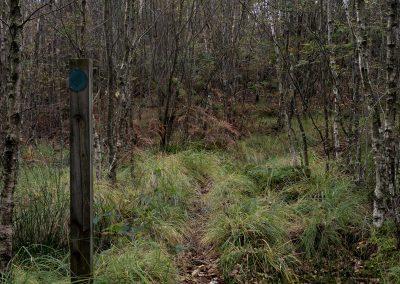 Path II, Eskdale, Lake District, lake district landscape photographer