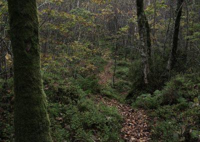 Path I, Eskdale, Lake District, lake district landscape photography