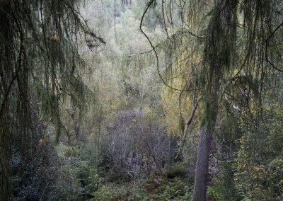 Wyming Brook, Sheffield, peak district, peak district landscape photography, peak district landscape photographer, autumn, autumnal