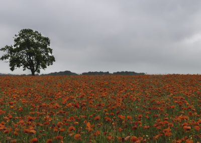 Peak Dsitrict Poppy Field, Peak District Landscape Photography